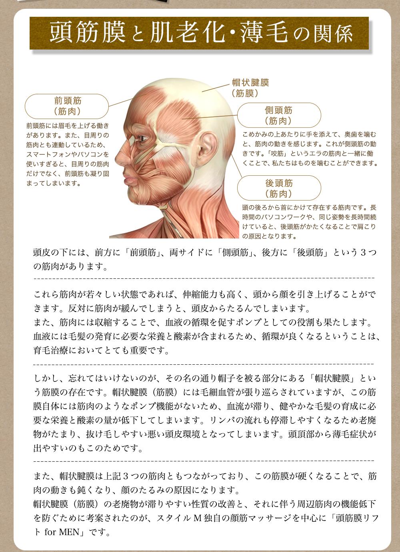 頭筋膜と肌老化・薄毛の関係 頭皮の下には、前方に「前頭筋」、両サイドに「側頭筋」、後方に「後頭筋」という3つの筋肉があります。  これら筋肉が若々しい状態であれば、伸縮能力も高く、頭から顔を引き上げることができます。反対に筋肉が緩んでしまうと、頭皮からたるんでしまいます。 また、筋肉には収縮することで、血液の循環を促すポンプとしての役割も果たします。血液には毛髪の発育に必要な栄養と酸素が含まれるため、循環が良くなるということは、育毛治療においてとても重要です。  しかし、忘れてはいけないのが、その名の通り帽子を被る部分にある「帽状腱膜」という筋膜の存在です。帽状腱膜(筋膜)には毛細血管が張り巡らされていますが、この筋膜自体には筋肉のようなポンプ機能がないため、血流が滞り、健やかな毛髪の育成に必要な栄養と酸素の量が低下してしまいます。リンパの流れも停滞しやすくなるため老廃物がたまり、抜け毛しやすい悪い頭皮環境となってしまいます。頭頂部から薄毛症状が出やすいのもこのためです。  また、帽状腱膜は上記3つの筋肉ともつながっており、この筋膜が硬くなることで、筋肉の動きも鈍くなり、顔のたるみの原因になります。 帽状腱膜(筋膜)の老廃物が滞りやすい性質の改善と、それに伴う周辺筋肉の機能低下を防ぐために考案されたのが、スタイルM独自の顔筋マッサージを中心に「頭筋膜リフト for MEN」です。